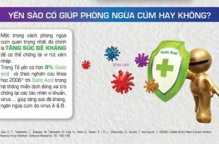 Tổ yến và công dụng phòng ngừa cúm